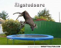 Älgstutsare Horrible Puns, Pranks, Vapen, I Laughed, Funny Memes, Funny Quotes, Billboard, Sweden, Humour