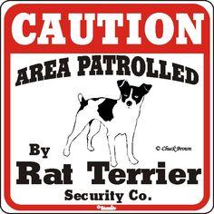I love my Rat Terriers!