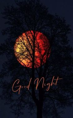 Good Night For Him, Good Night Funny, New Good Night Images, Good Night Love Quotes, Good Morning Beautiful Pictures, Free Good Morning Images, Good Night Friends, Good Night Wishes, Good Night Sweet Dreams
