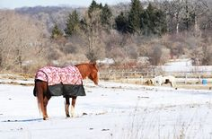 Blanketing's Impact on Horses' Winter Hair Coats - TheHorse.com | Will blanketing my horse occasionally during extreme cold temperatures compromise my horse's winter coat? #winterhorsecare #blankets