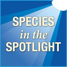 """News from NOOA; """"Species in the Spotlight: Survive to Thrive"""" :: NOAA Fisheries #SRKW"""