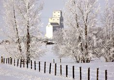 Grain Elevator Seen Through Frost Covered Trees On A Saskatchewan Winter Day. Saskatchewan Canada, Winter Day, See Through, Ink Art, Dodge, Abandoned, Grains, Stock Photos, Elevator