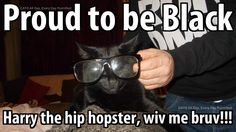 My cat Harry looking cool and proud! Friends, Cats, Animals, Amigos, Gatos, Animales, Animaux, Animal, Cat