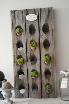Mur v g tal int rieur en 80 id es pour la maison cologique plants vertica - Mur de fleur interieur ...