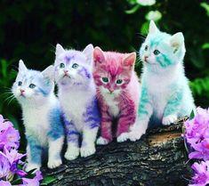 Risultato immagine per rainbow kittens Funny Animal Videos, Cute Funny Animals, Cute Baby Animals, Cute Cats And Kittens, I Love Cats, Kittens Cutest, Cute Puppies, Cute Dogs, Easter Cats