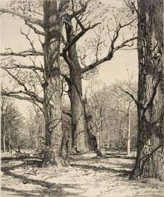 Andrew Wyeth I Drawing Landscape Drawings, Landscape Art, Landscape Paintings, Andrew Wyeth, Jamie Wyeth, Tree Drawings Pencil, Art Drawings, Tree Sketches, Nature Drawing