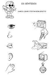 Resultado de imagem para cinco sentidos objetivos