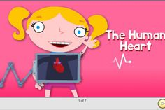 Explorimg the human body with your preschooler - learn about the human heart