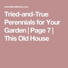 Tried-and-True Perennials for Your Garden   Page 7   This Old House