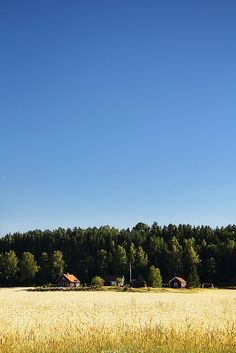 Sweden.  I would happily live in that little house, surrounded by tall trees and swaying grass. :)