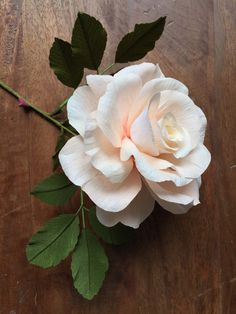 Hybrid Tea Rose | Suzonne Stirling.jpg