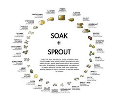 Studies have shown that when we reduce phytic acid in food, we absorb more minerals from that food. Legumes, grains, nuts, and seeds have phytic acid. The phytic acid level varies across these food. How To Make Sprouts, How To Sprout Beans, Sprouting Seeds, Sprouting Grains, Cuisine Diverse, Nourishing Traditions, Raw Vegan, Raw Food Recipes, Training Tips