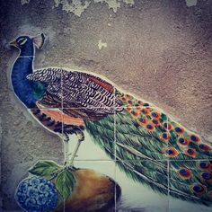 Peacock Azulejos (Tiles) in Lisbon, Portugal