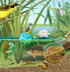 Chivalrous supplemented aquaponics system check here Aquaponics System, Hydroponics, Aquaponics Garden, Gardening, Permaculture, Pond Dipping, Turtle Pond, Pond Life, Arte Popular