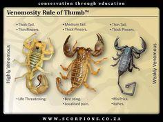 venomousity rule of thumb