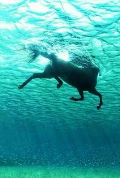 Horses are amazing swimmers!