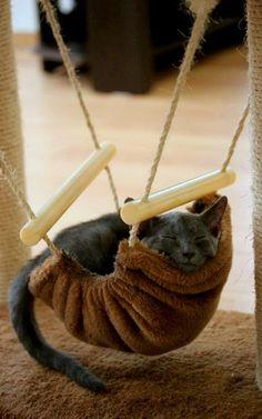 was für ne Erkältung - Junge, Junge häng ich in den Seilen (dabei soll ich ab Mittwoch arbeitstechnisch fit sein....)