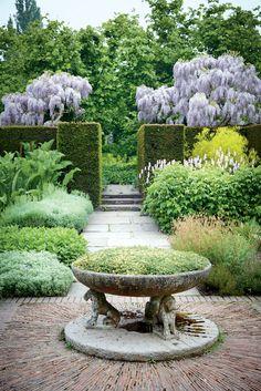 Standard wisterias flower beyond the hedges of the herb garden/Sissinghurst