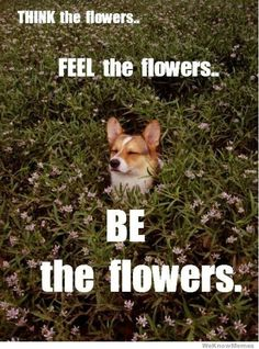 Be the flowers.