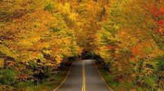 Smugglers' Notch, Vermont. The thick forest in this mountainous part of America once provided cover for smugglers.