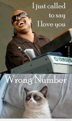 grumpy cat pictures with captions | Funny Picture - Stevie wonder and grumpy cat