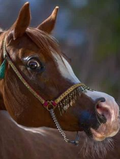 Funny Animals, Cute Animals, Beautiful Arabian Horses, Arabian Beauty, Types Of Horses, All About Horses, Horse World, Cute Horses, Horse Breeds