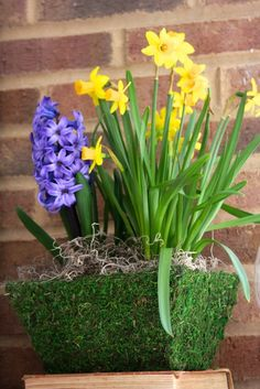Spring floral arrangements with flowering bulbs in moss covered basket.