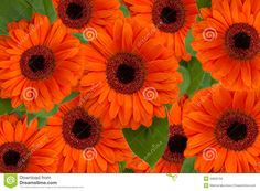 Bright Orange Flowers - Bing Images