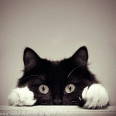 Cute and funny pictures of animals 43. Cats.