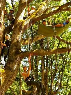 Tree Climbing Planet, Oregon City, OR - This Oregon farm is dedicated to teaching people the professional art of tree climbing