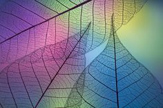 Prismatic leafs by Shihya Kowatari on 500px