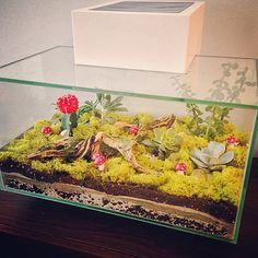 Create a hip looking terrarium from an old fish tank! Grab some soil, succulents, moss and fun decorations to add to the tank. Lightly water and display your masterpiece. Sure to add life to any room! Create a hip looking terrarium from an old fish Terrarium Table, Fish Tank Terrarium, Large Terrarium, Cactus Terrarium, Terrarium Plants, Cactus Flower, Flower Bookey, Flower Film, Flower Pots