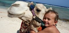 Dahab - Can you imagine hugging a camel? If you get this close, you can see that Camels have 2 sets of curly eyelashes to keep the dust out. So...if they bat their eyes at you...they're not flirting...they're just clearing the dust!