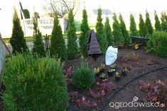 Ogród mały, ale pojemny;) - strona 32 - Forum ogrodnicze - Ogrodowisko