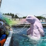 """Genetically Engineered Beluga Whales Are Attacking Christian Families with Homosexual Chemtrail Water at Seaworld"" [satire]"