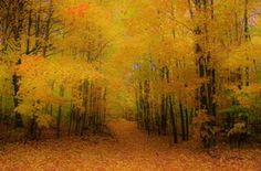 Fall Paradise