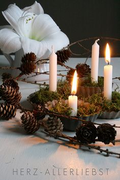 white candles in tart pans with moss and pine boughs