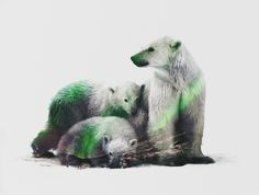 Poster | ARCTIC POLAR BEAR FAMILY von Andreas Lie | more posters at http://moreposter.de