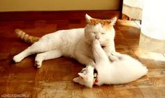 Kitty plays with mother.