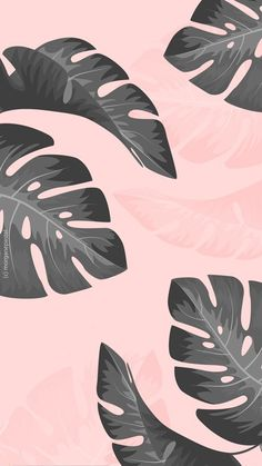 Iphone Wallpaper - free wallpaper/ fond d'écran palmier tropical black pink iphone - Iphone and Android Walpaper Cute Black Wallpaper, Black Wallpaper Iphone, Iphone Background Wallpaper, Pattern Wallpaper Iphone, Kawaii Wallpaper, Iphone Backgrounds, Wallpaper Cartoon Iphone, Screenlock Wallpapers, Black Design Wallpaper