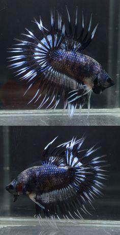 He looks spiky!