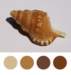 Day 41: Colours of a shell  * inspired by Design Seed