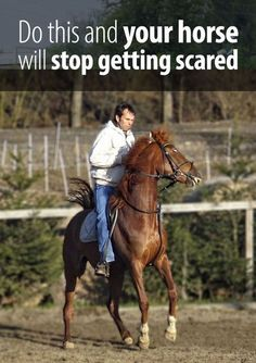 horse training tips Most of the riders do one mistake that encourages their horse to get scared. Take a guess what that is and then read the article!Most of the riders do one mistake that encourages their horse to get scared. Take a guess what that is and Horseback Riding Tips, Horse Riding Tips, Horse Tips, My Horse, How To Ride A Horse, Horse Training, Training Tips, Training Equipment, Horse Behavior