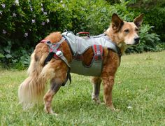 Escape Proof Dog Harness; Good for Pullers, Too! Review of the ...