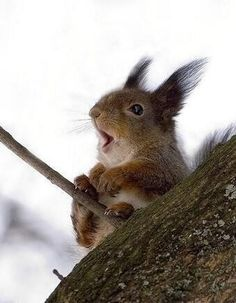 We see cats and dogs too often. This is a squirrel on a windy day.isn,t he cute? - Imgur