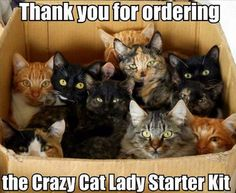 I'm already a crazy cat lady but I'll take a box of kittens any day.