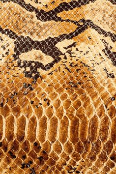 Snake skin  #patterns and #textures