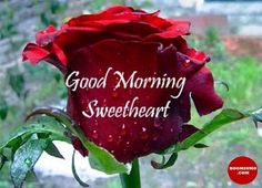 Good Morning Love Quotes for Girlfriend Good Morning Love, Romantic Good Morning Sms, Very Good Morning Images, Good Morning Quotes For Him, Good Morning Images Download, Good Morning Flowers, Good Morning Picture, Good Morning Messages, Morning Pictures