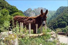 Asturias en imagenes. Descargas