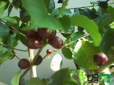 Find out more on www.hoya.sk :)